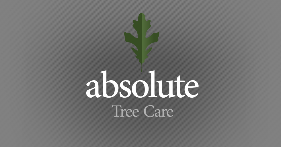 Tree Logo Design Png Tree Care Logo Design